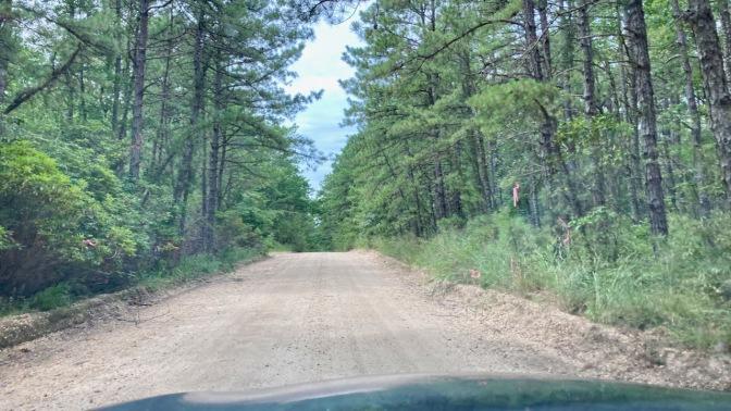 View of dirt road in Pine Barrens.