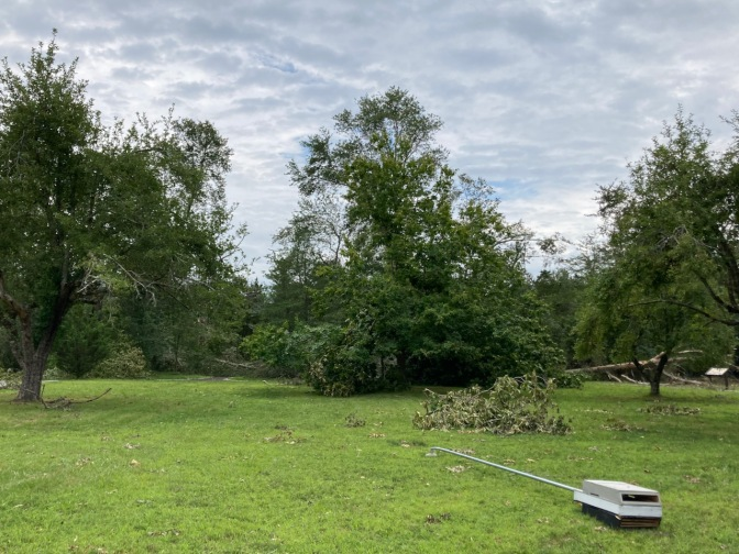 Grassy area with trees, some fallen over, along with a metal pole in foreground lying on the ground.