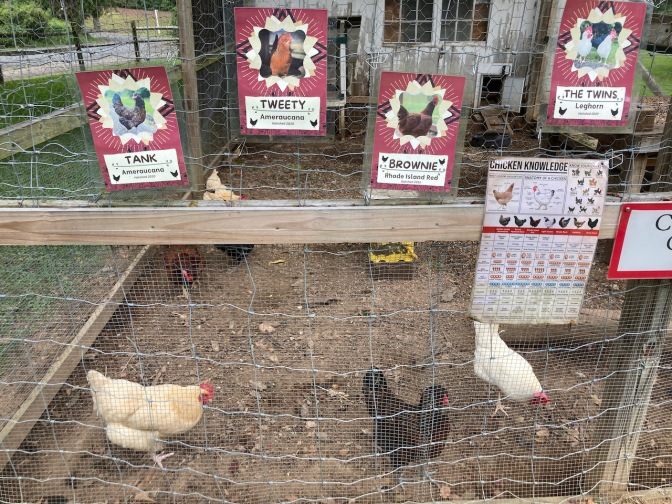 Chicken coop, with placards indicating names of different chickens.