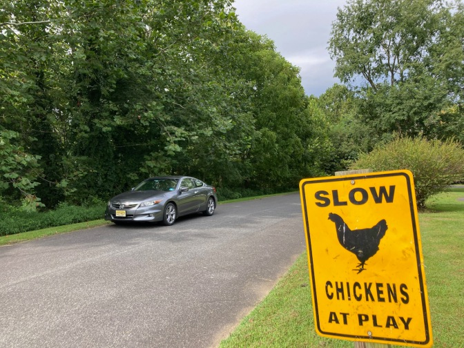2012 Honda Accord on road, with sign beside road that says SLOW CHICKENS AT PLAY