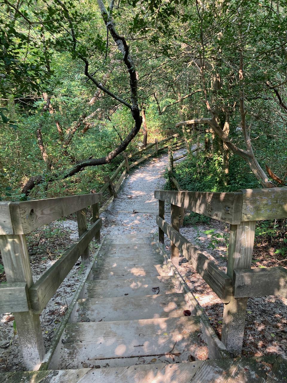 Pathway through woods on beach.