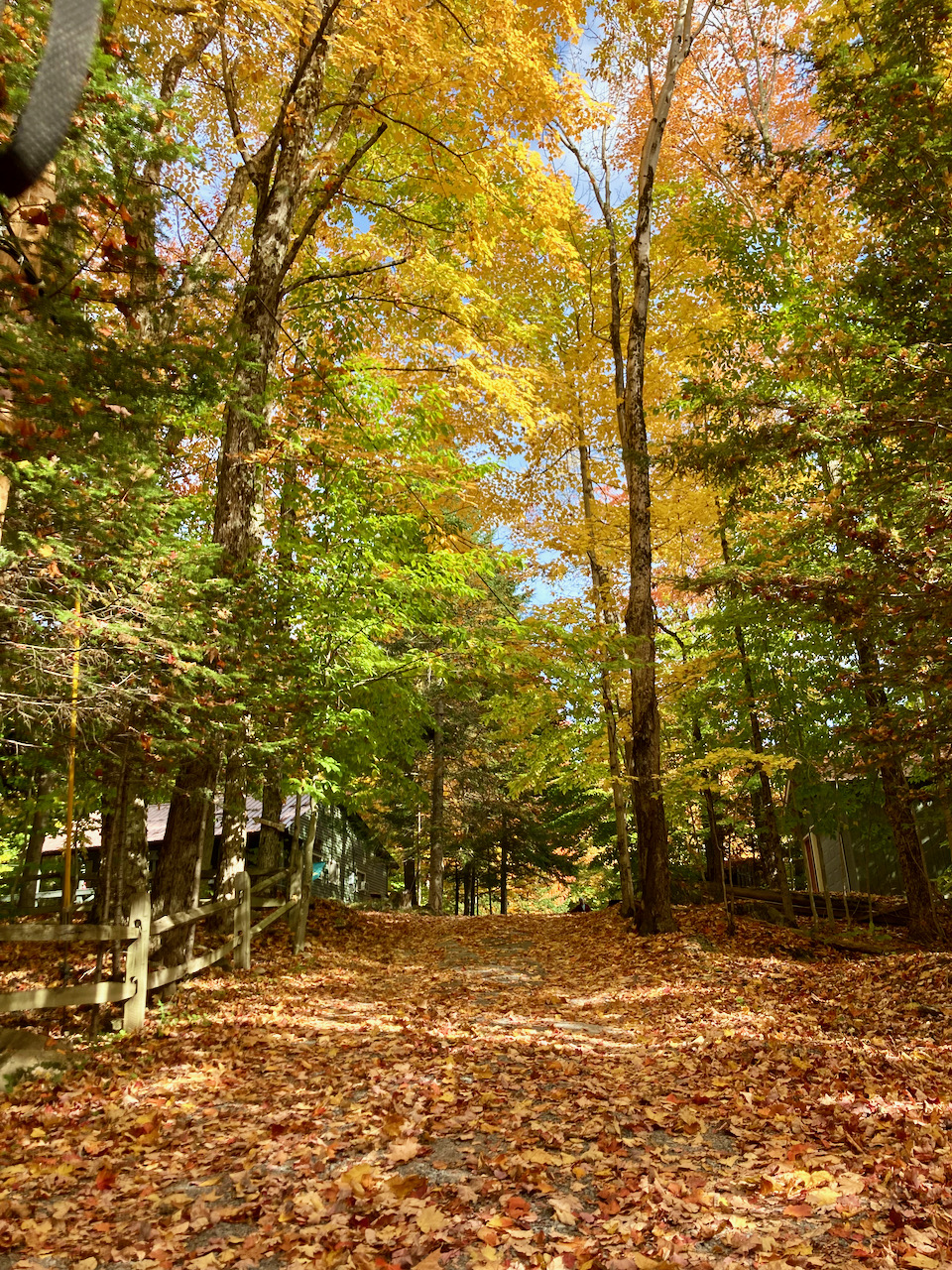 Path, covered in fallen leaves, with trees with colorful leaves alongside trail.