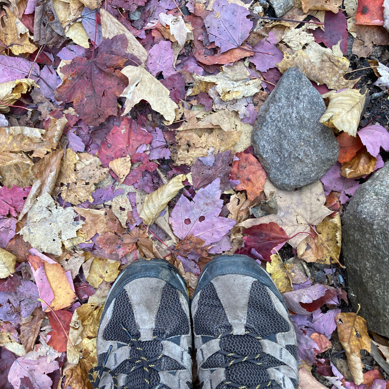 Two hiking shoes on leaf-lined trail.